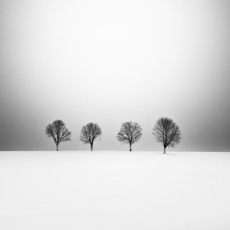 four_trees