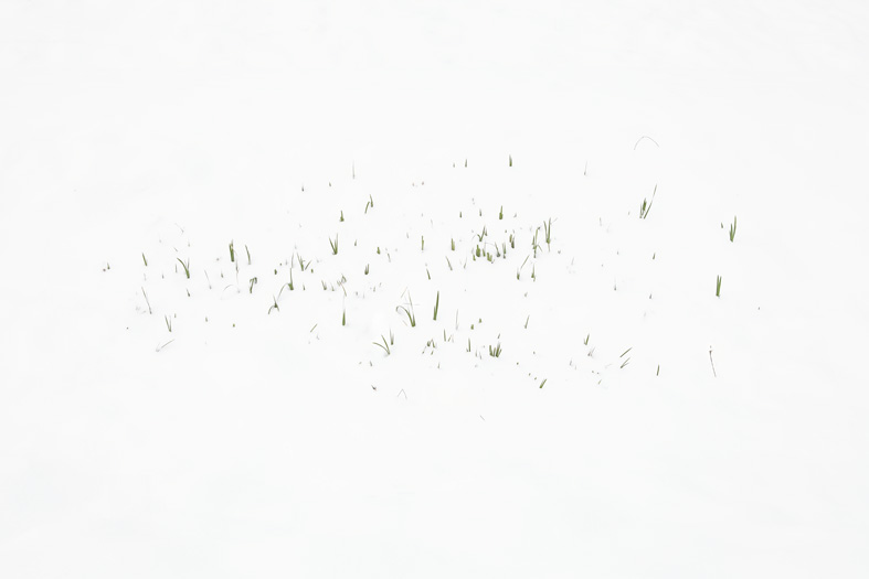 2017-New-Grass