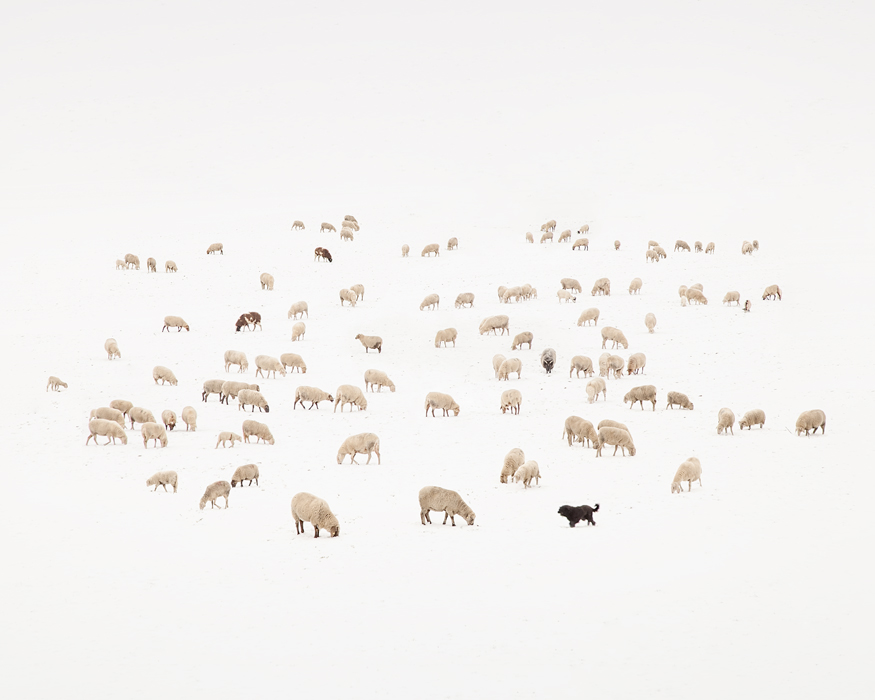 2019-Counting-Sheep