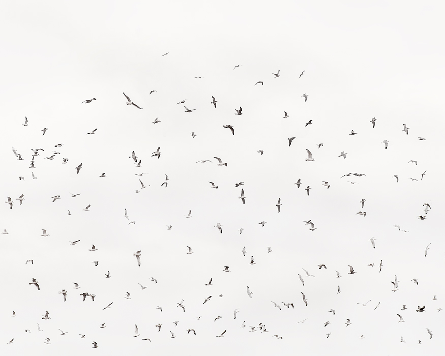 2020-180-Birds