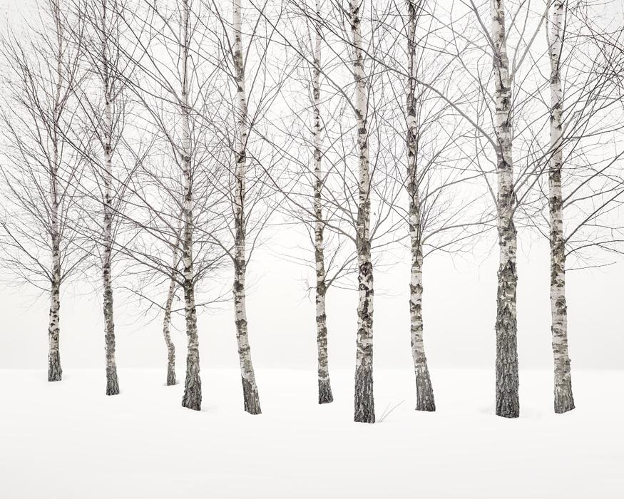 2020-Winter-Birches