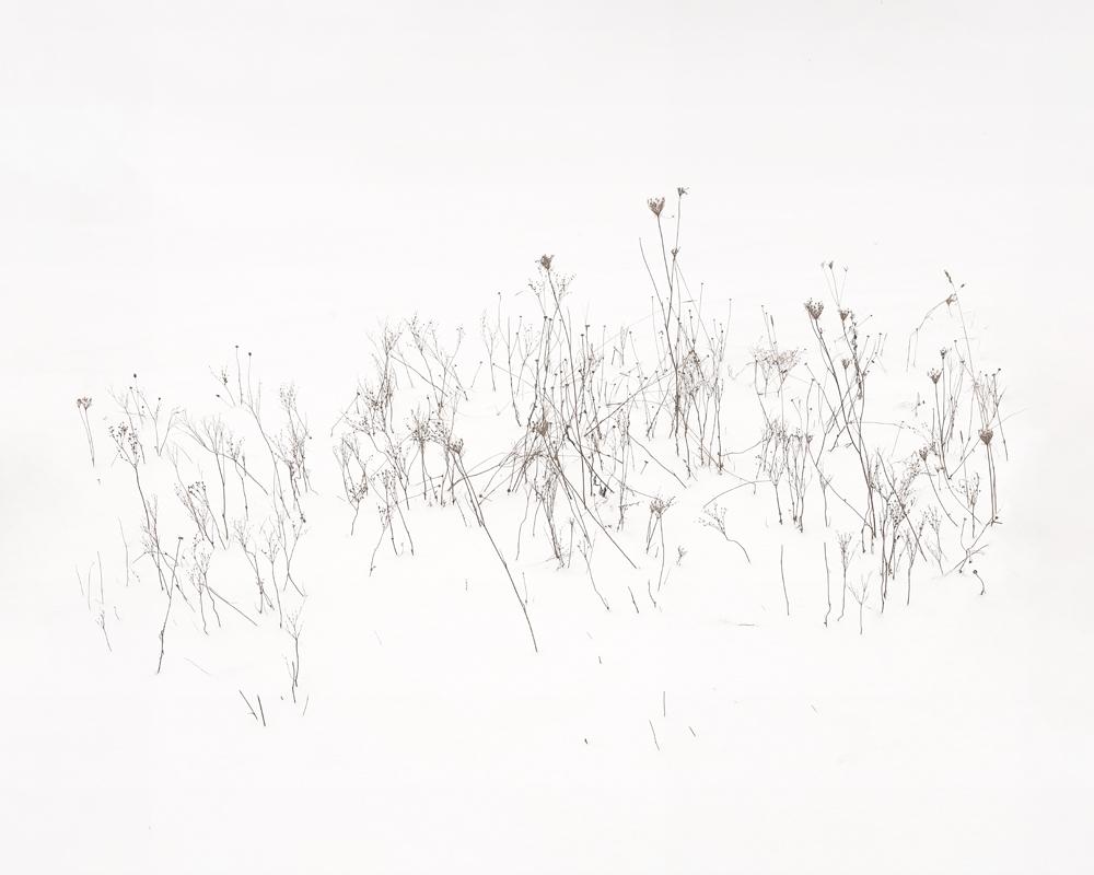 2021-Calligraphy-II